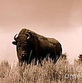 Bison Cow On An Overlook In Yellowstone National Park Sepia by Catherine Sherman