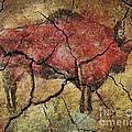 Bison by Dragica  Micki Fortuna