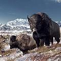 Bison Herd In Winter by Daniel Eskridge