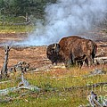 Bison Mud by James Anderson