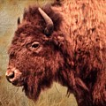 Bison Portrait   by Betty  Pauwels