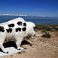 Bison Sculpture Great Salt Lake Utah by Bob Pardue