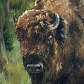 Bison Study - Zero Three by Lori Brackett