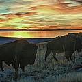 Bison Sunset by Bruce J Barker