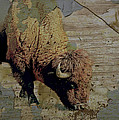 Bison Vintage Style -photo- Art by Ann Powell