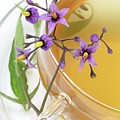 Bittersweet Herbal Tea by Bildagentur-online/th Foto/science Photo Library