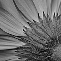 Black And White Blossom by Frozen in Time Fine Art Photography