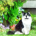 Black And White Cat By Flowers by Susan Savad