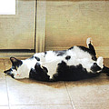 Black And White Cat Reclining by Jayne Wilson