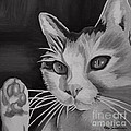 Black And White Cat by Robyn Saunders