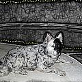 Black And White Dog by Joan  Minchak