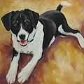 Black And White Dog by Pet Whimsy  Portraits
