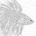 Black And White Fish by MGL Meiklejohn Graphics Licensing