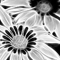 Black And White Florals by Pati Photography