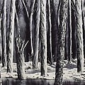 Black And White Forest by Don Bowling