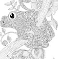 Black And White Frog by MGL Meiklejohn Graphics Licensing