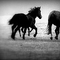 Black And White Horses by Lori Reeths