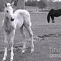 Black And White In Black And White by Cheryl Hurtak