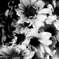 Black And White by Kathleen Struckle