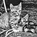 Black And White Kittens by Minding My  Visions by Adri and Ray