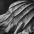 Black And White Lotus Leaf by Jane Ford