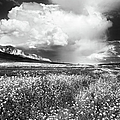 Black And White Meadow by Theresa Tahara