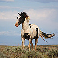 Black And White Mustang by Jean Clark