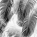 Black And White Palm Fronds by Karon Melillo DeVega