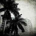 Black And White Palms by Beth Williams