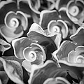 Black And White Sea Shells Cozumel by For Ninety One Days