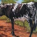 Black And White Shorthorn Steer by Denise Horne-Kaplan