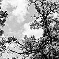 Black And White Tree by Andrea Mazzocchetti