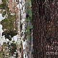 Black And White Tree by Ulli Karner