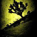 Black And Yellow Joshua Tree Poster by Noemy O