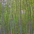 Black Bamboo Heights by Eve Spring