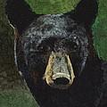 Black Bear by C Ryan Pierce