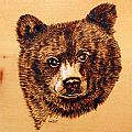 Black Bear Cub by Ron Haist