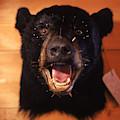 Black Bear Head by Chris Anderson