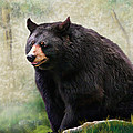 Black Bear by Mary Almond