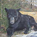 Black Bear - Wildlife Art -scruffy by Jan Dappen