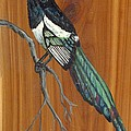 Black Billed Magpie by Ruth Seal