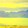 A Black Bird Is Crossing The Golden Landscape by Hilde Widerberg