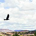 Black Bird In Flight by Jamie Heeke