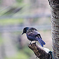 Black Bird by Raymond J Deuso
