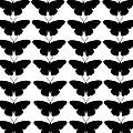 Black Butterflies by Chastity Hoff