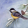 Black-capped Chickadee by Katherine Miller