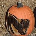 Black Cat On Pumpkin by Kathleen Struckle