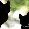 Black Cat Silhouettes by Sharon Dominick