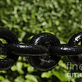 Black Chain by Les Palenik