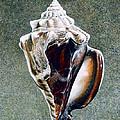 Black Conch by Richard  Ellis